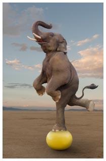 elefante-equilibrio-palla